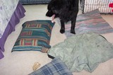 No-Sew Dog Pillows And Dog Beds