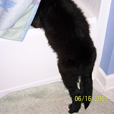 Destin trying to get in the shower.