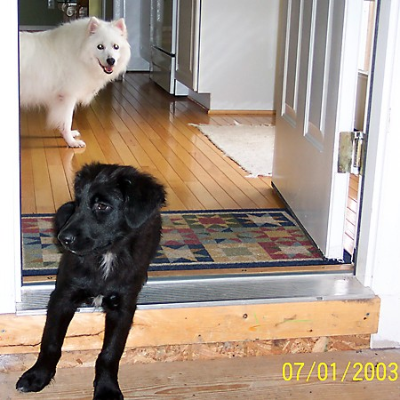 Destin and Jersey hanging out in the kitchen.