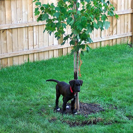 Destin and our new tree.