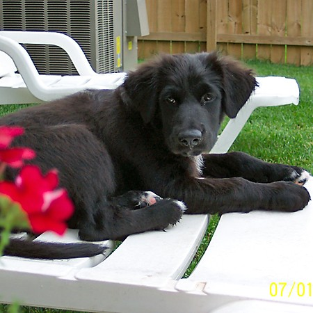 Destin sitting by the red flowers.