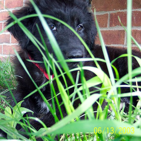 Destin hiding in the tall grass beneath our steps.