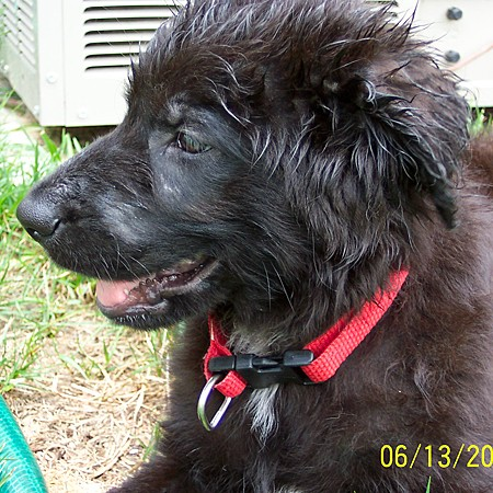 Destin's all wet from playing in the hose.