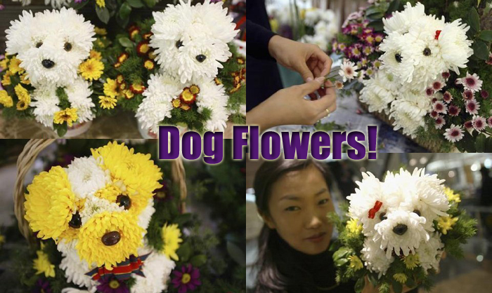 Dog flowers flower arrangements made in the shape of dogs the diy dog flowers solutioingenieria Gallery