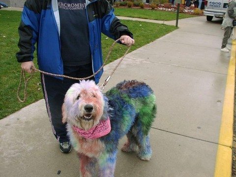 diy-dog-hair-dye