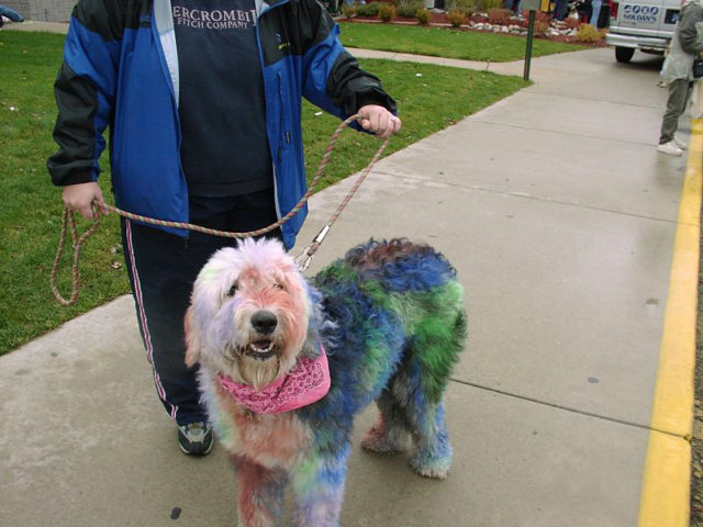 5 DIY Dog Hair Dye Methods Using Food Color... Good To Know Before ...