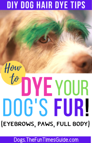 DIY dog hair dye tips if you're thinking about dying your dog's eyebrows, paws, or full body a different color!