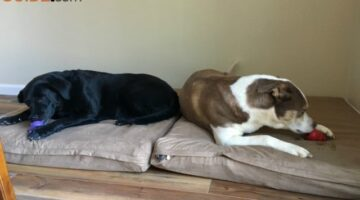 DIY Dog Bed Ideas: See How I Made XL Orthopedic Dog Beds For Our 2 Large Dogs & Created A Simple Dog Mudroom Space