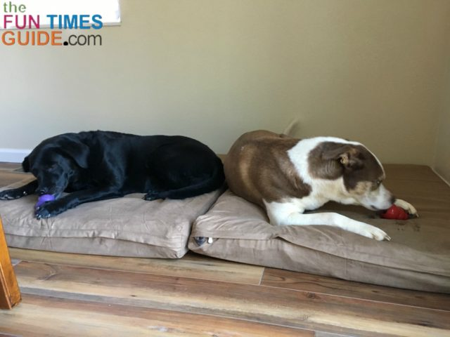 See The DIY No-Sew Extra Large Dog Bed That I Made From A Memory ...