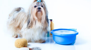 The Ultimate Guide To Shih Tzu Grooming: How To Groom A Shih Tzu At Home, Shih Tzu Grooming Prices & The Best Grooming Tools