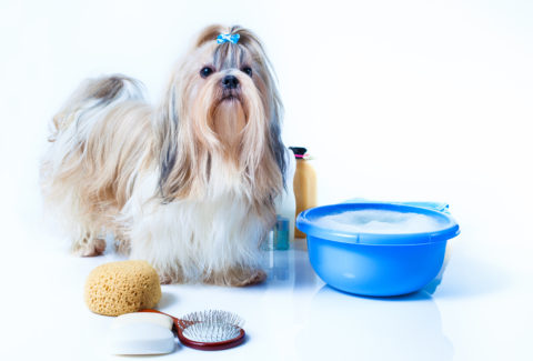 DIY Shih Tzu grooming tips and tricks that will make grooming your dog easier.