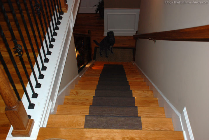 I'm at the top of the steps giving you a dogs-eye view of what this DIY stair runner looks like to Tenor.