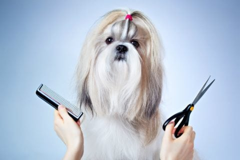 See the differences between DIY dog grooming and professional dog grooming, including Shih Tzu grooming prices.