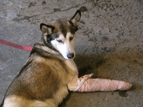 dog-after-an-accident-by-francois-at-edito-qc-ca.jpg