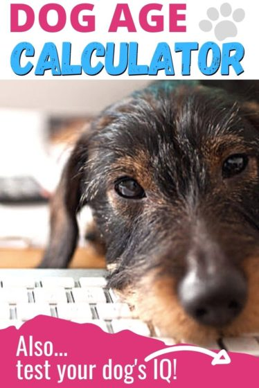 Dog age calculator free online tool