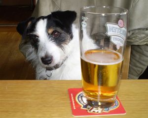 dog-and-alcohol-by-elsieesq.jpg