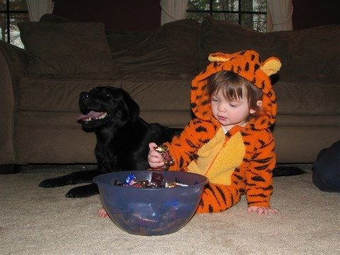 Kids mean well, but they can inadvertently give your dog candy that isn't safe for dogs!