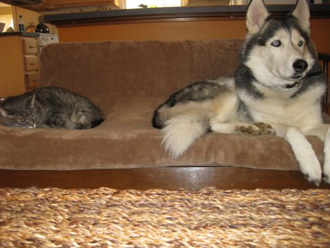 dog-and-cat-together