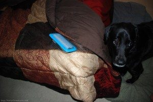 dog-and-hair-remover
