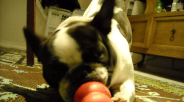 Reasons To Use Different Dog Kong Treats Each Time You Stuff Your Dog's Kong Toy