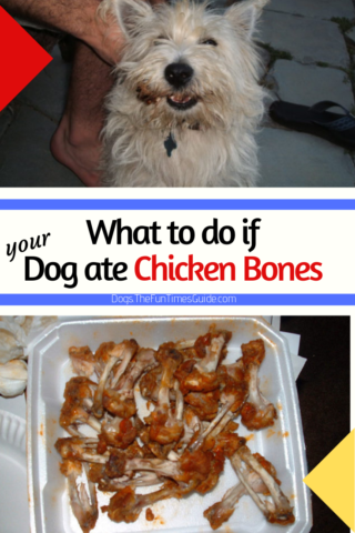 What to do if your dog ate chicken bones