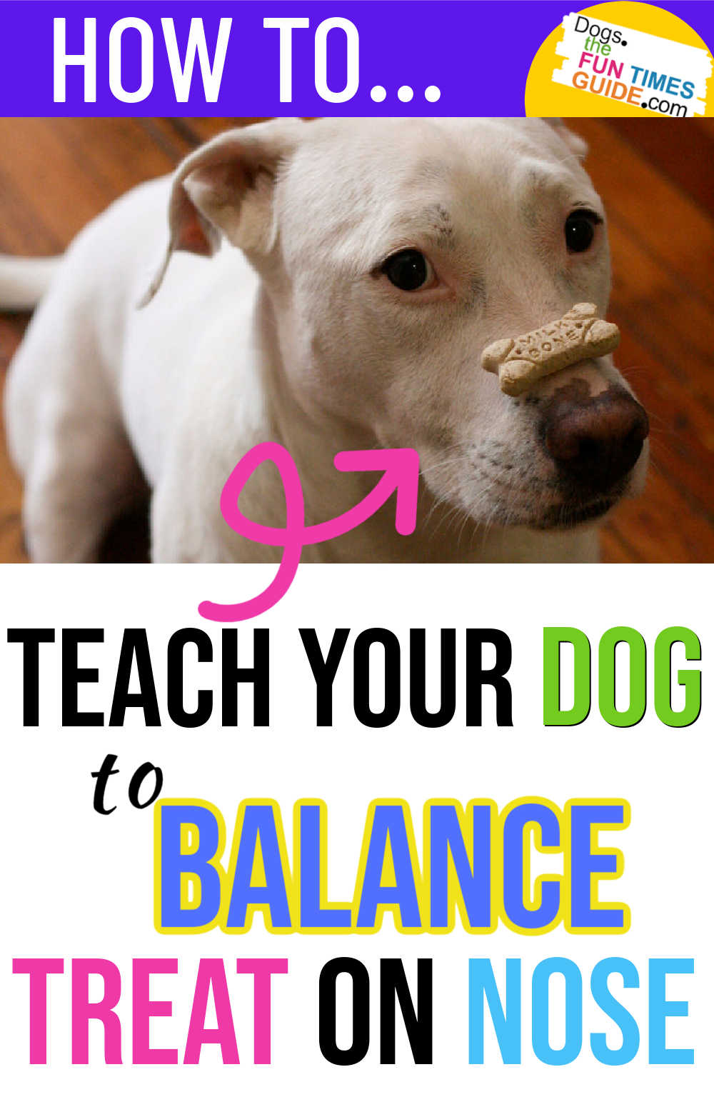 How To Teach Your Dog To Balance A Treat On Their Nose (All Of My Dogs Can Do This Trick!)