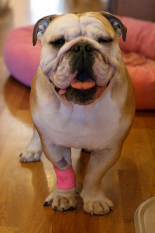 here's how to treat hotspots on dogs