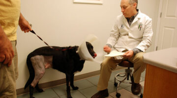 TPLO Recovery: What You And Your Dog Can Expect