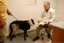 dog-being-discharged-from-pet-hospital.jpg