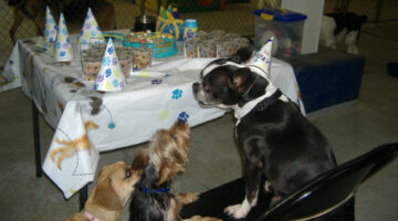 9 Easy Tips For Planning A Dog Birthday Party