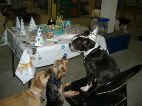 dog-birthday-party-by-sheepguardingllama.jpg