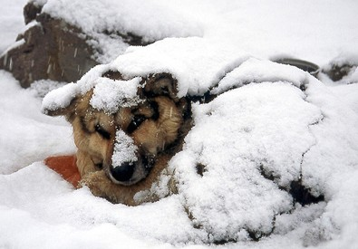 dog-buried-under-snow.jpg