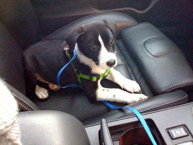 Dog Afraid Of Car Rides? Here's How To Get Your Dog