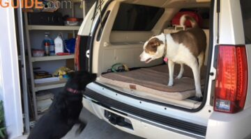 This is our older Black Lab girl dog jumping into the SUV before a car ride.