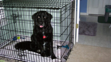 Crate Training Dogs: Here's How We Did It