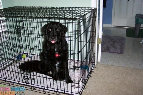 dog-crate-training
