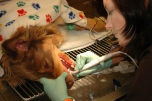 dog-dental-cleaning