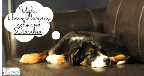 Vet approved home remedies for dog diarrhea that you can do at home