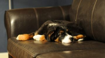 Dog Diarrhea Remedies To Try At Home