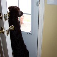 Does Your Dog Bark At The Doorbell? Halloween Is A Great Time For Dog Doorbell Training!