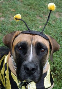 dog-dressed-as-a-bee.jpg