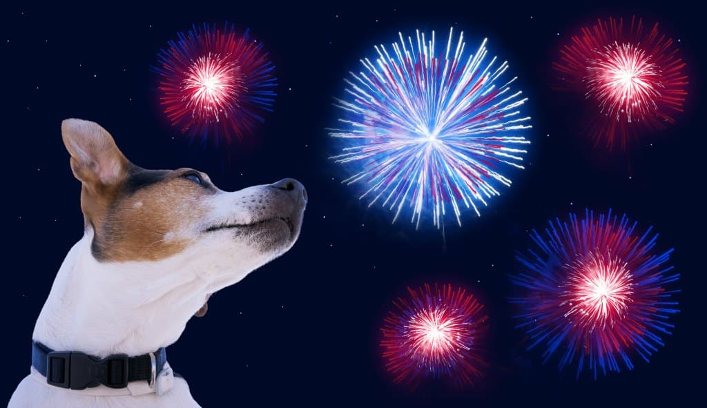 Dogs and fireworks tips you need to know!
