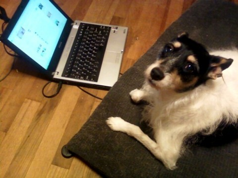 dog-email
