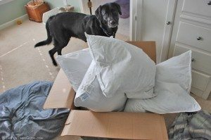 dog-eyes-new-pillows-for-bed.jpg