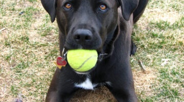 Dog Fetch Training: How To Get Your Dog To Bring Something Back To You