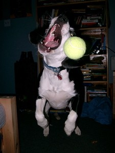 dog-fetching-tennis-ball-by-greencolander.jpg