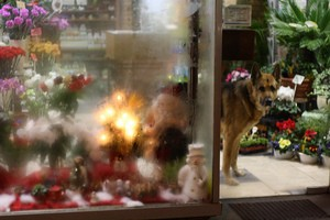 dog-flowers-by-Photocapy.jpg