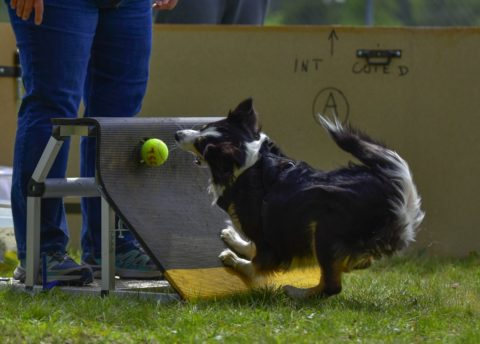 How to make a dog flyball course