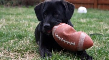 Proof: Dogs Love Football!