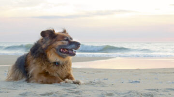 Dog Beach Guide: Top 10 Dog-Friendly Beaches
